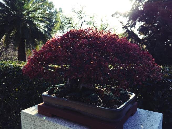 Botanico7